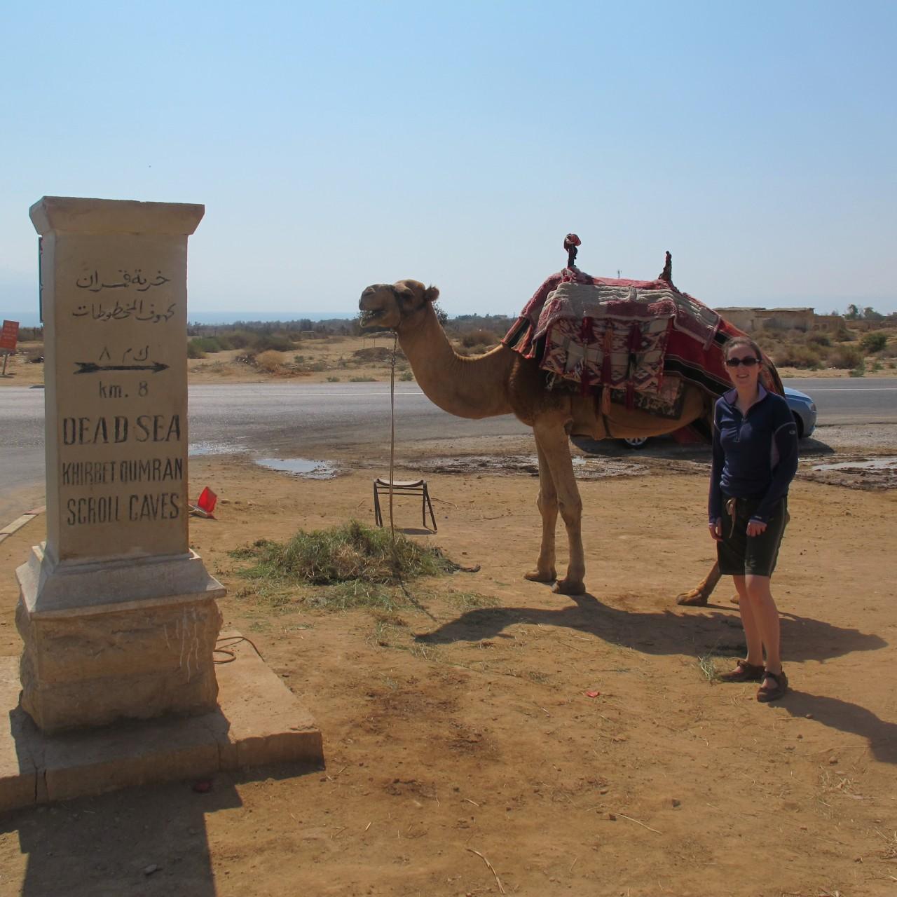 Camel in Israel