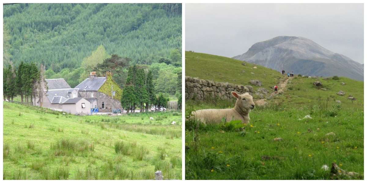 Sheep farm hotel, Scotland