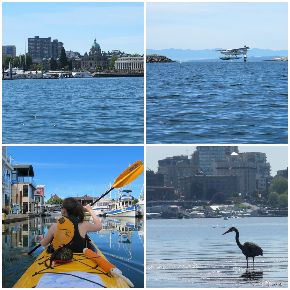 Kayak in Victoria British Columbia