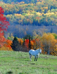 Horse in Autumn Colours