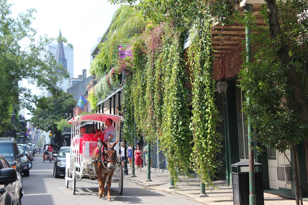 Our top travel experiences in new orleans eat drink for Go to new orleans