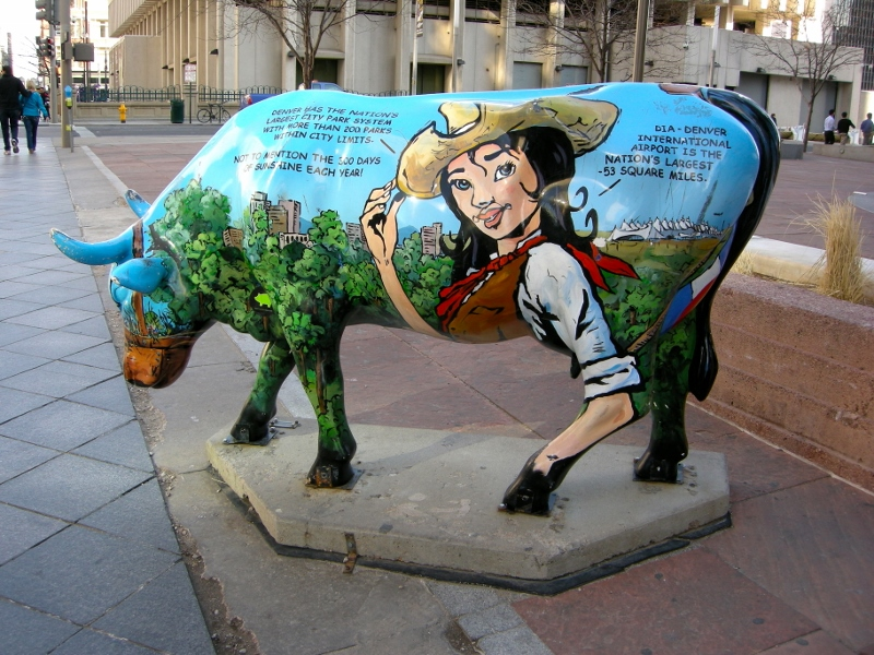 cow denver (800x600)