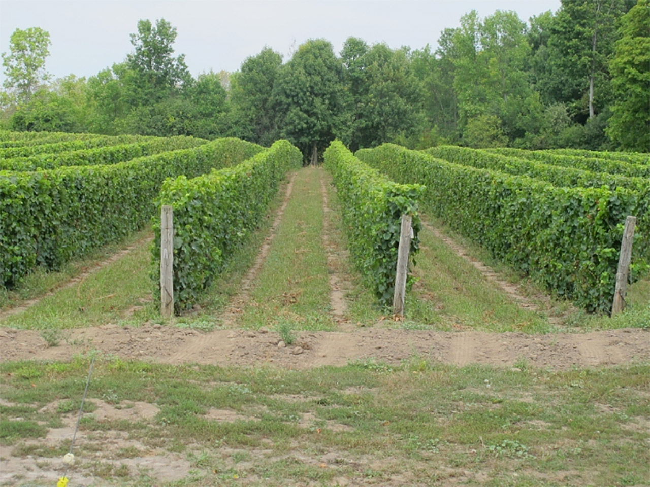 Chadsey's Cairns Winery in Prince Edward County, Ontario