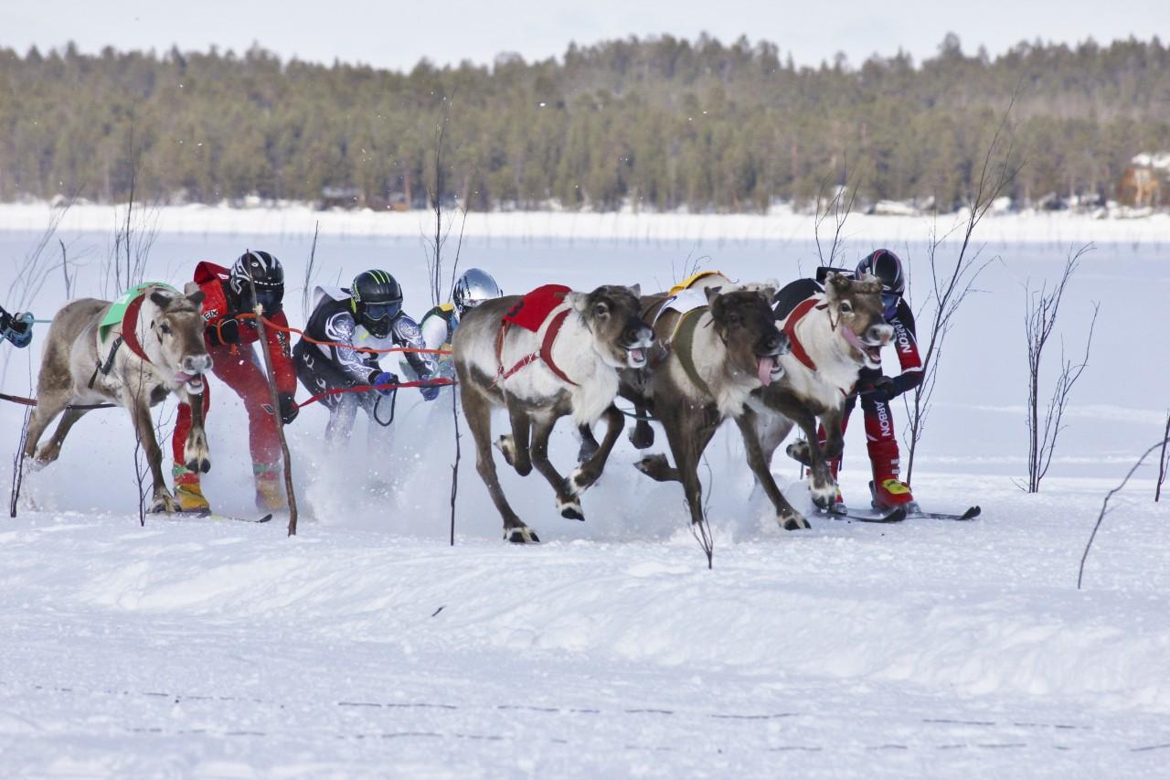 Reindeer Race Finland