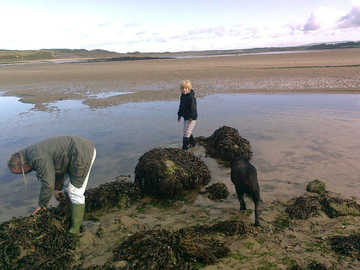 Foraging for mussels at Killala Bay Co. Mayo on the Wild Atlant