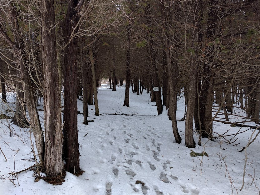 Viamede Trail snow shoe