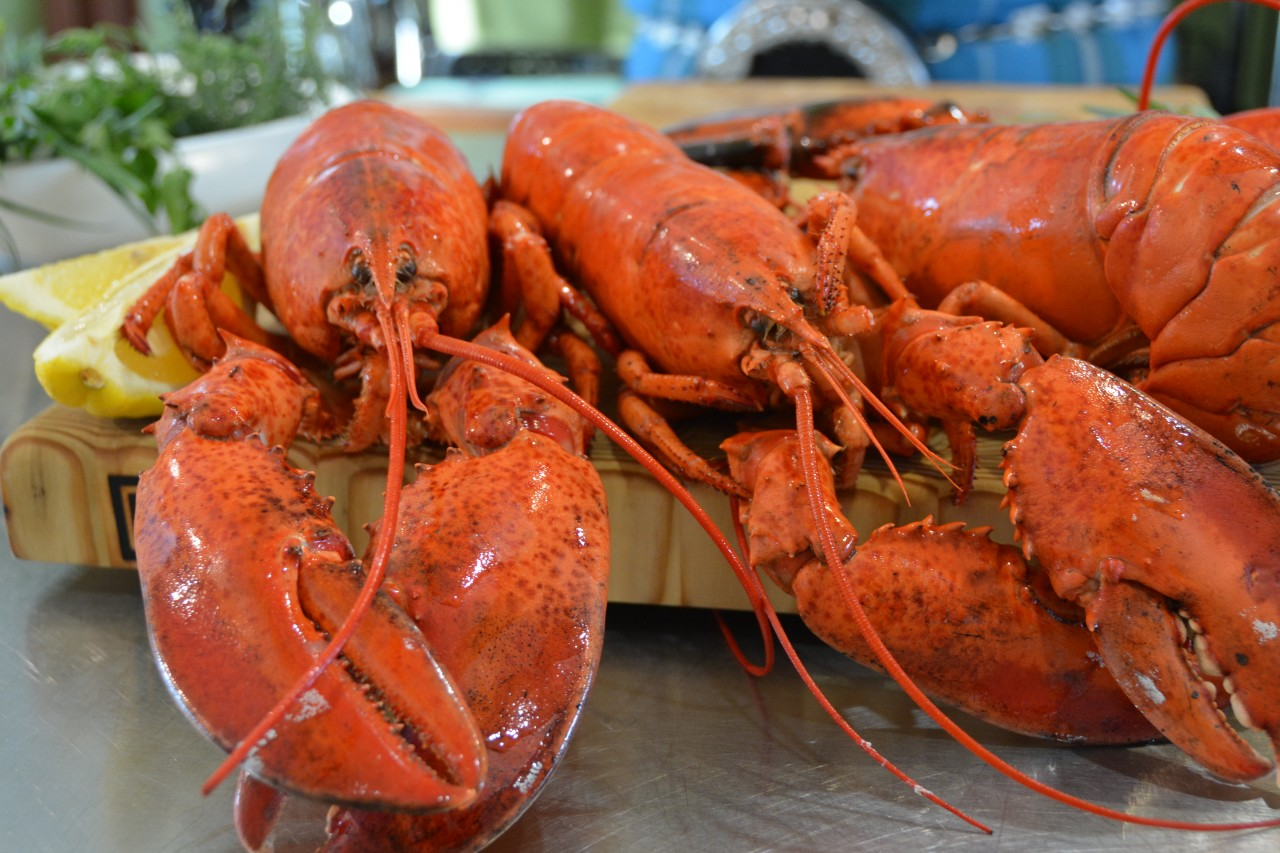 Nova Scotia Lobsters with Chef Alain Bosse