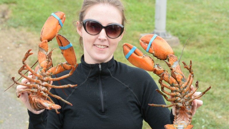 Nova Scotia lobster