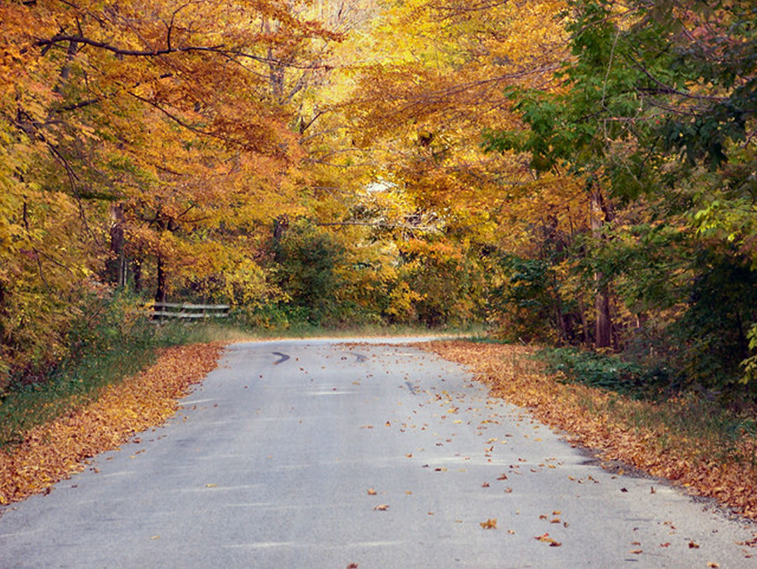 Fall Gravel Roads-visitgrey.ca