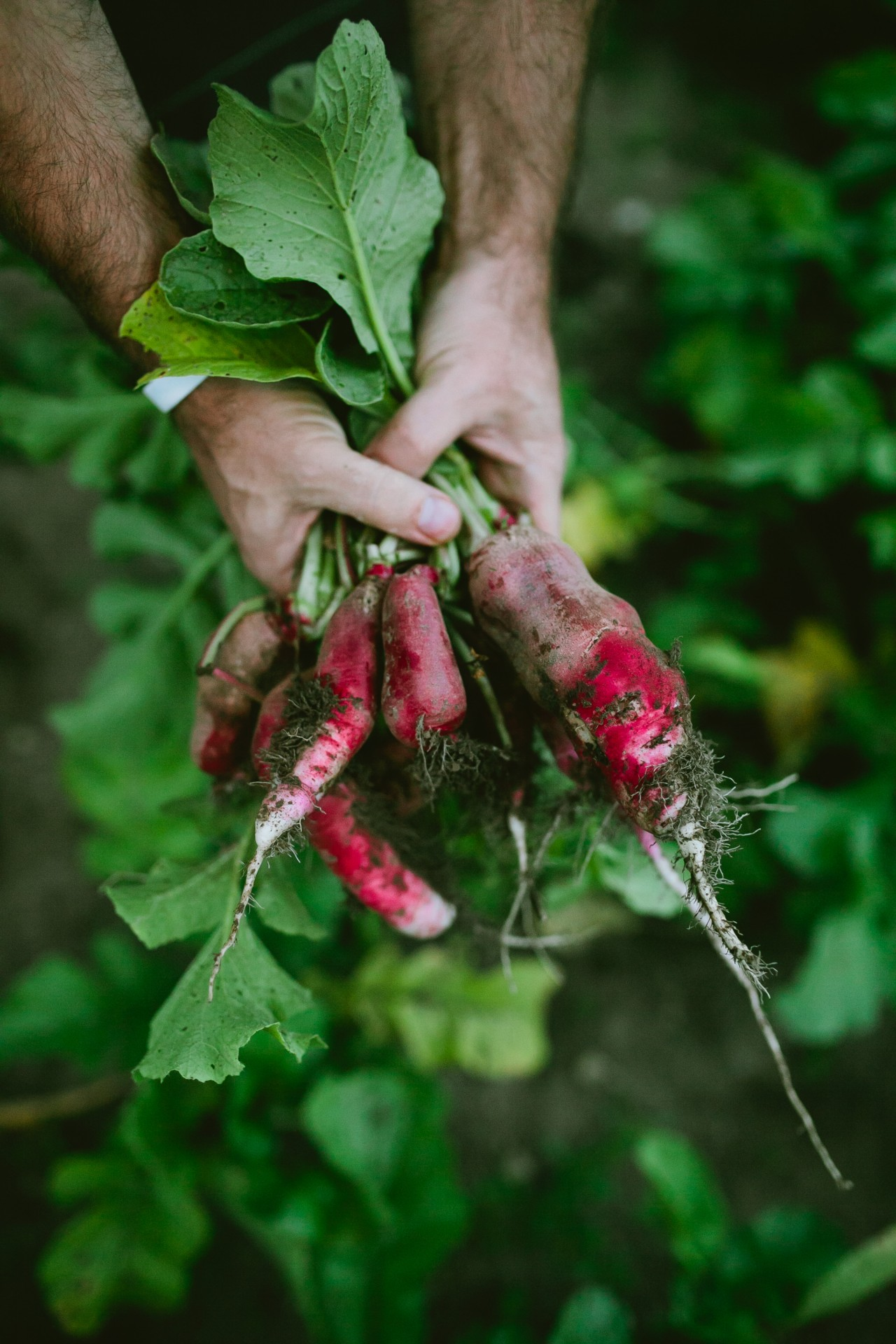 Langdon Hall review