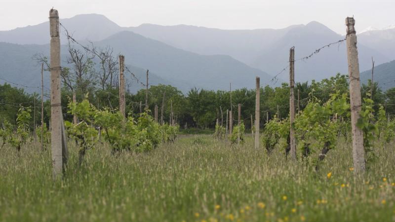 Georgia Vineyards by Khuroshvili Ilya