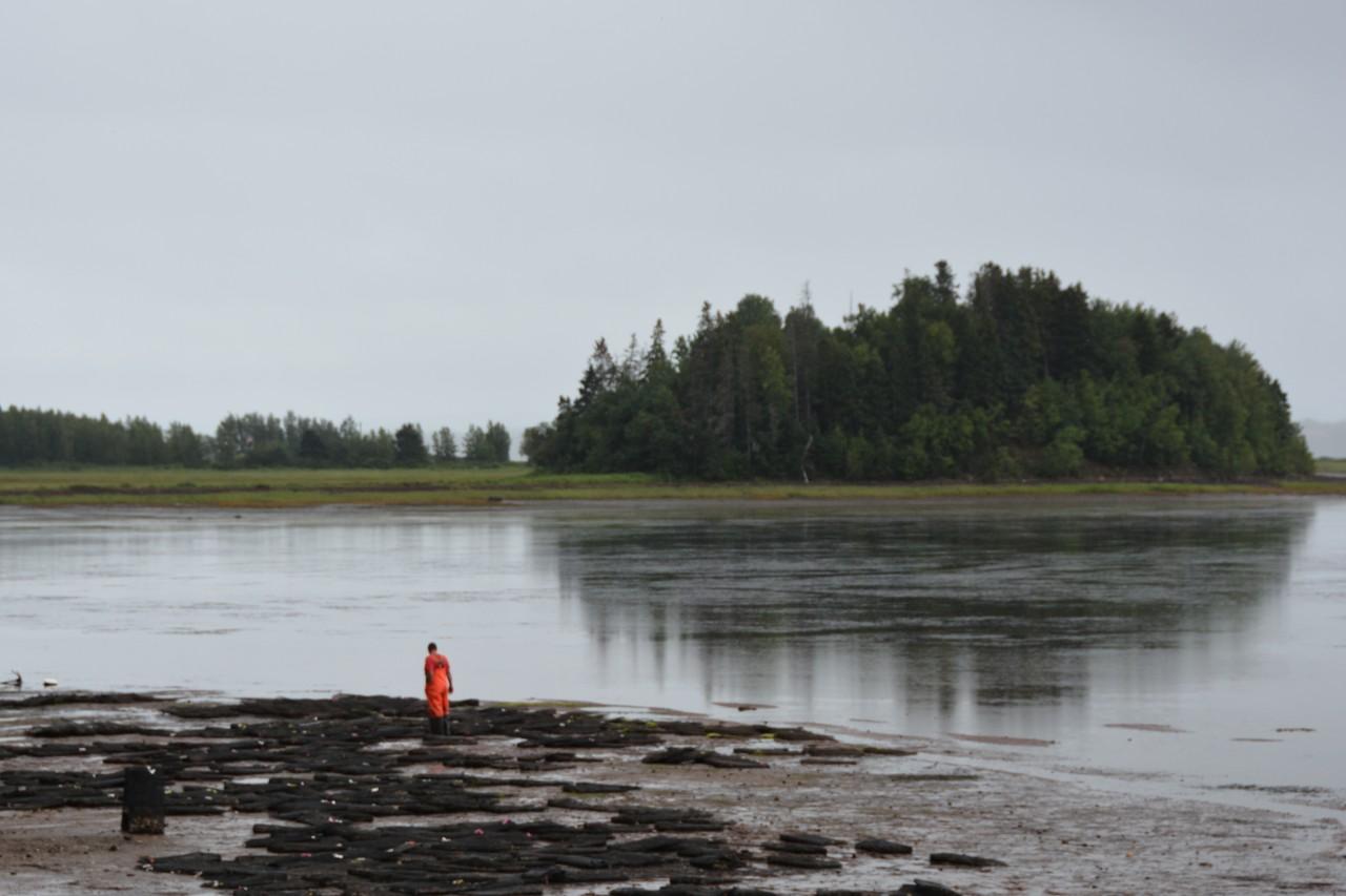 Nova Scotia oyster farm